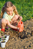 Petite fille plantant des plantes de tomate Photos stock