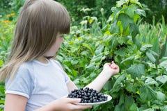 Petite fille près des groseilles d'un buisson Photo stock