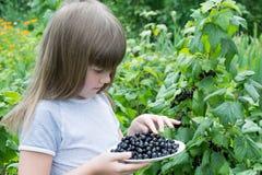 Petite fille près des groseilles d'un buisson Photographie stock libre de droits