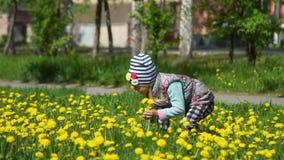 Petite fille rassemblant les pissenlits jaunes banque de vidéos