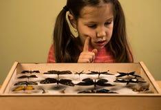 Petite fille recherchant la collection d'entomologie de papillons tropicaux image libre de droits