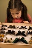 Petite fille recherchant la collection d'entomologie de papillons tropicaux photos stock