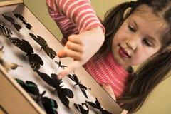 Petite fille recherchant la collection d'entomologie de papillons tropicaux photo libre de droits