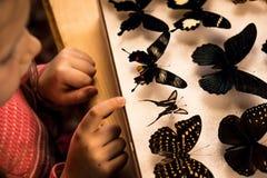 Petite fille recherchant la collection d'entomologie de papillons tropicaux images stock