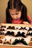 Petite fille recherchant la collection d'entomologie de papillons tropicaux photos libres de droits