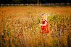 Petite fille sur le pré Image stock