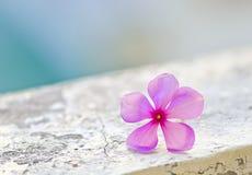 Petite fleur image libre de droits