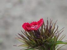 Petite fleur au milieu de nulle part Photo libre de droits