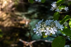 Petite fleur blanche Photos libres de droits