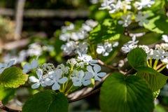 Petite fleur blanche Images stock
