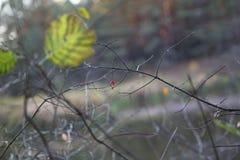 Petite fleur dans un grand forrest photographie stock