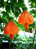 Petite fleur de cloche Photos libres de droits