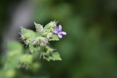 Petite fleur de jardin Image libre de droits