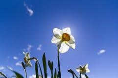 Petite fleur grande Photographie stock libre de droits