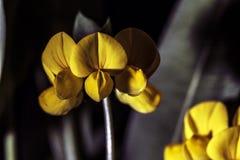 Petite fleur jaune Images stock