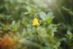 Petite fleur jaune Photographie stock libre de droits