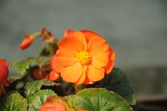 Petite fleur orange Image stock
