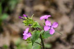 Petite fleur pourpre Photographie stock libre de droits