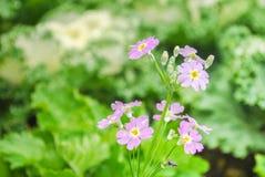 Petite fleur pourpre rosâtre ayant le légume comme fond Image stock