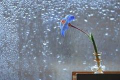 Petite fleur près de fenêtre humide Photos libres de droits