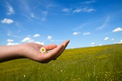 Petite fleur précieuse Photographie stock libre de droits