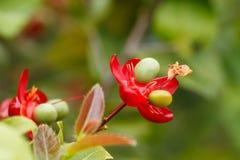 Petite fleur rose Photographie stock libre de droits