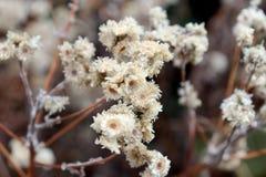Petite fleur sèche Fond et texture image libre de droits