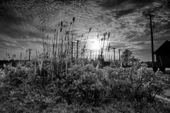 Petite forêt photographie stock libre de droits