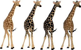 petite giraffe Photographie stock