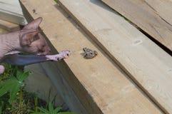 Petite grenouille en nature Photographie stock libre de droits