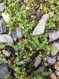 Petite herbe Images stock