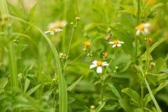 Petite herbe photo stock