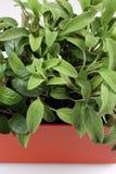 Petite herbe verte Image libre de droits