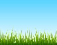 Petite herbe verte, fond sans couture de ciel bleu Photographie stock libre de droits