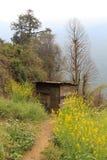 Petite hutte en bois avec le champ de moutarde Photos stock