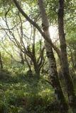 Petite lumière du soleil de l'ONU de joncteurs réseau d'arbre Photos stock