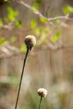 Petite mauvaise herbe de transitoire Photo libre de droits