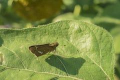 Petite mite sur une feuille énorme de plante verte avec l'ombre claire de mite image stock