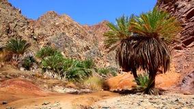 Petite oasis verte dans le désert rocheux banque de vidéos