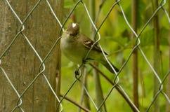 Petite observation d'oiseau à l'appareil-photo Images stock