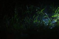 Petite partie de champ d'herbe avec mis en lumière photographie stock libre de droits