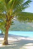 Petite paume sur la plage tropicale Photo stock