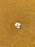 Petite pierre blanche sur le sable d'or photos stock