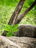 Petite pierre de milieu d'arbre Images libres de droits