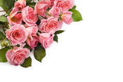 Petite Pink Roses. A bouquet of beautiful petite pink roses on a white background royalty free stock image