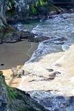 Petite plage près des falaises chez Carrick un Rede en Irlande du Nord Photos libres de droits