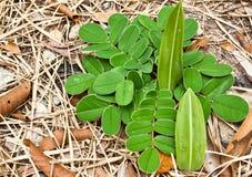 Petite plante cultivée de la terre Image stock