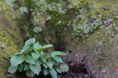 Petite plante verte à la base de l'arbre images stock