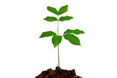 Petite plante verte Photographie stock