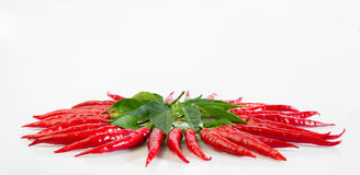 Petite red chili Stock Images